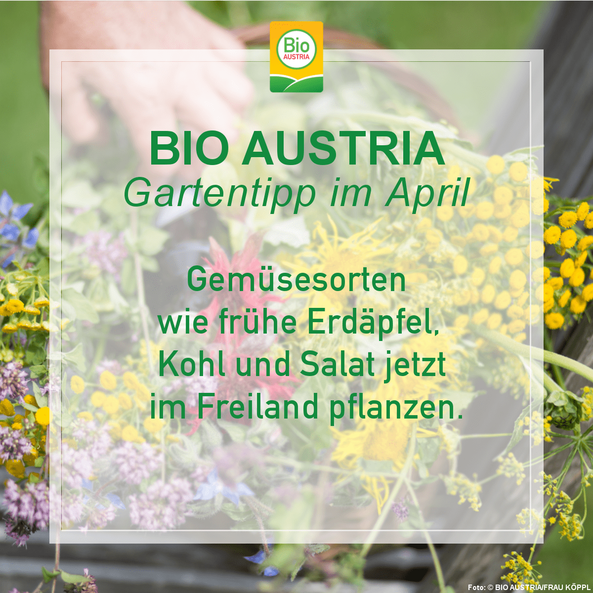 Gartentipp im April Gesmüsesorten aussäen