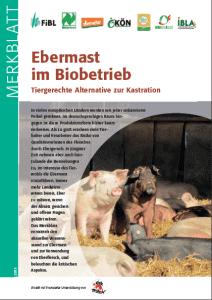 MB_Bioebermast