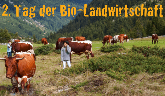 2. Tag der Bio-Landwirtschaft: Bild einer Bio-Almweide mit Pinzgauer Kühen