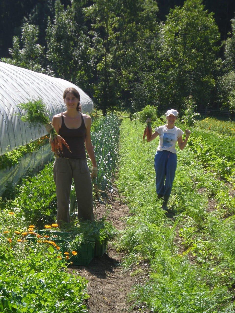 Gemüseanbau in Kärnten