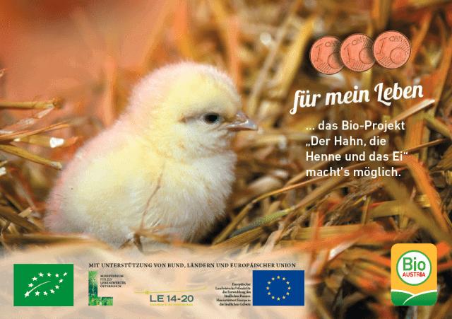 Plakat Der Hahn, die Henne und das Ei