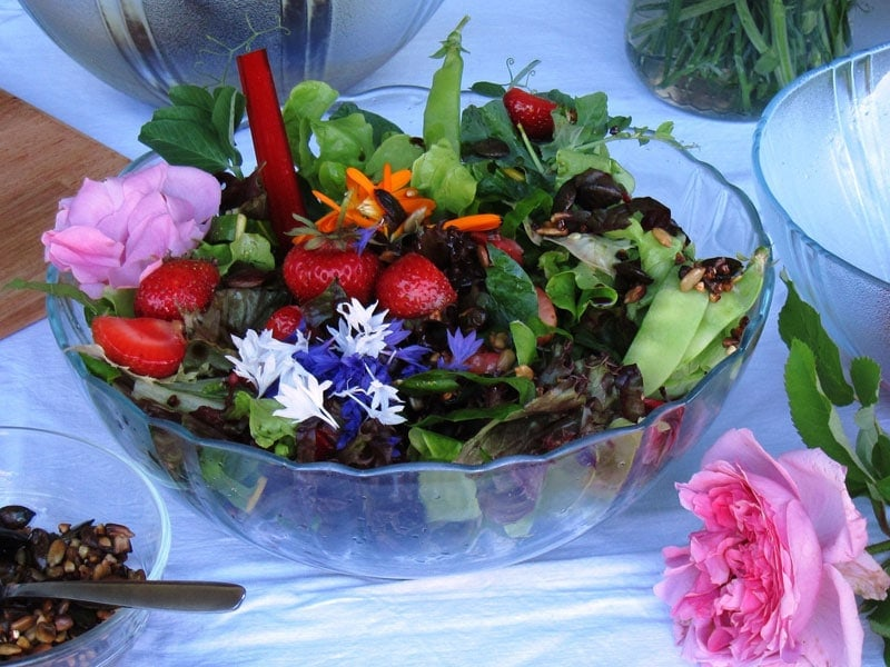 Bunter Blattsalat mit Erdbeeren