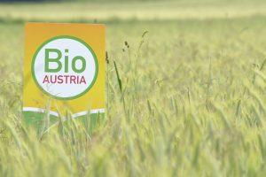 BIO AUSTRIA Logo in einem Getreidefeld