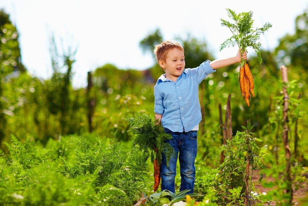 Junge mit einem Bund Karotten in der Hand