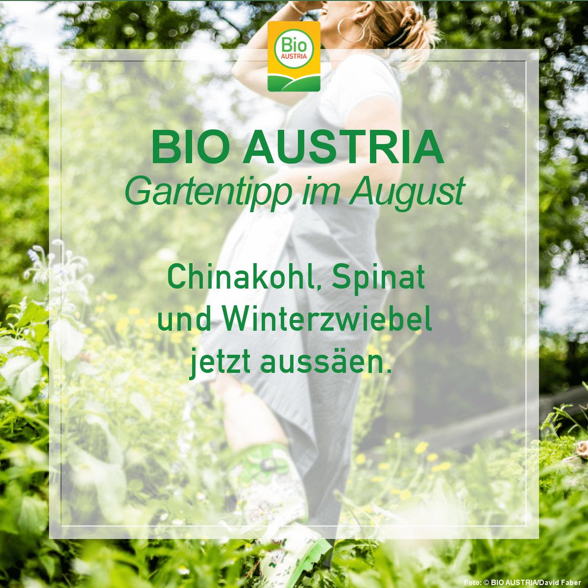BIO AUSTRIA Gartentipp Winterzwiebel jetzt aussäen