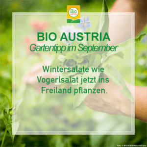 Gartentipp im September