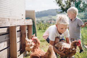 Hennen und Kinder