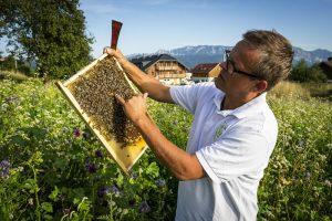 Klaus Costadedoi vom Bienenhof Attersee erklärt den Bienenkasten