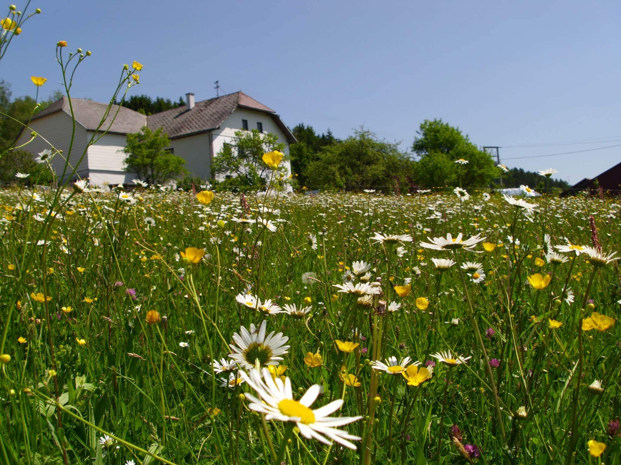 Wiese mit verschiedenen Blumen und Haus im Hintergrund
