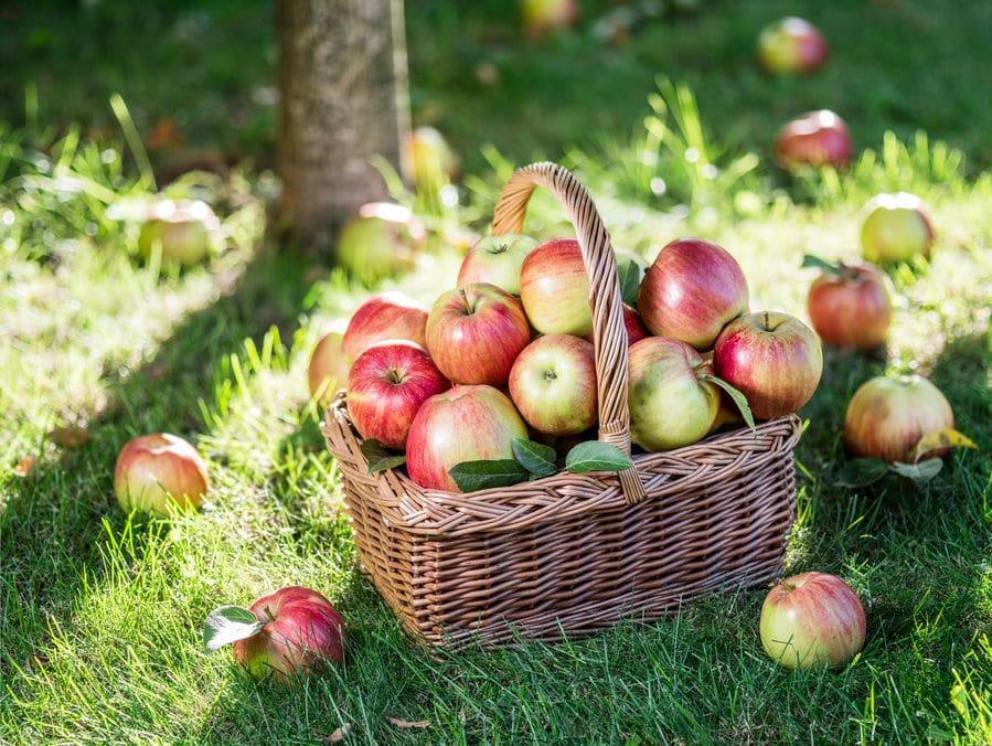 Korb mit Äpfel