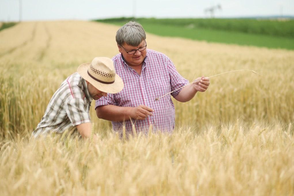 Zwei Biobauern stehen im Getreidefeld und Begutachten die Pflanzen.