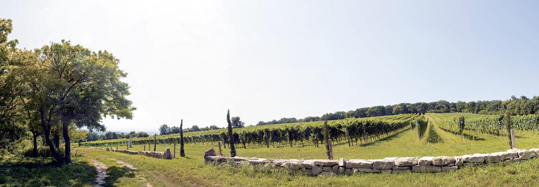 Banner BIO Wein und Schnaps MARIELL